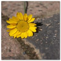 Flower 2 by munchinees
