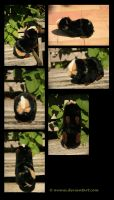 Plushie: Kadaj the Guinea Pig commission by Avanii