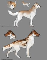Canine Design to give With conditions by Taikgwendo