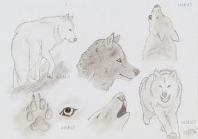 wolves (drawings) lobos, un variadillo ^^ by aridni7