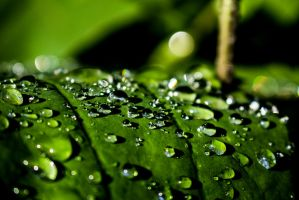 Raindrops On Leaf by MegnRox15