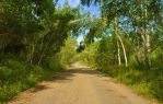 The road in the woods by Korolevatumana