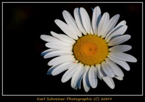 White 3 by KSPhotographic