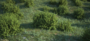 Wild Grasses And Bushes Top by Massi-San