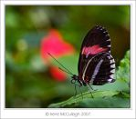 Butterfly with Reds by substar