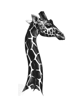 Charcoal Giraffe by Simkaye