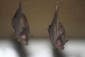 Bats Under the Bed by Serendith