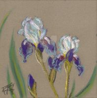 Two Irises by robertsloan2