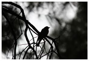 there's a bird by firxxx