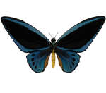 E-S Butterfly II by Elevit-Stock