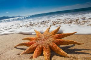 Beautful Beach Starfish by Spanishalex