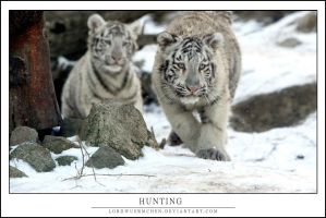 Hunting by AF--Photography