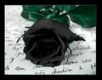 Black Rose by Ketmara
