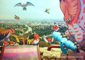 Wild Talonflame family over the city of dream