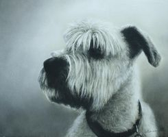 Dog Portrait by Nimbus2005