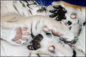 Cluster of Paws by mydigitalmind