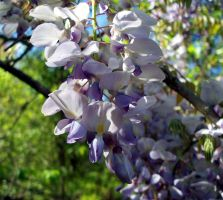 Spring's Colors 8 by WalnutHill