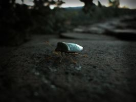 insect by Dresoria
