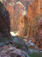 Grand Canyon Beauty by Muffinyness