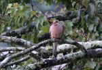 Dove in the morning 8-8-14 by Tailgun2009