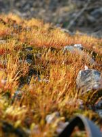Grass on the stone by thinghost