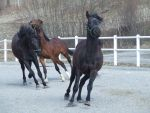 Horse stock 19 by Ulvar-Stock