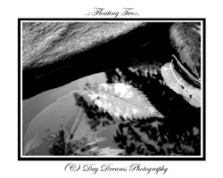 .:Floating Two:. by DayDreamsPhotography