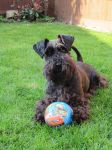 Lulu with ball by muteor