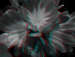Flowers 2 anaglyph 3D by Agaver
