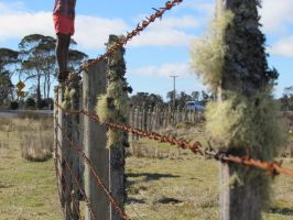 moss on the fence by molbags
