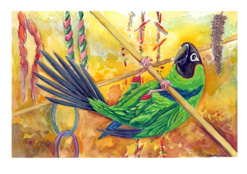 Nanday Conure by AmandaMyers