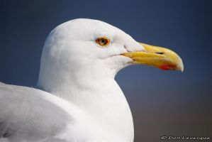 Friendly seagull 4 by imonline