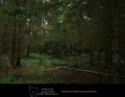Forest stock by black-cat16-stock