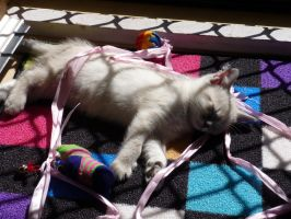 My Kitten Misty... by Lifes-what-u-make-it