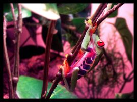 red eyed treefrog by an6el-of-death