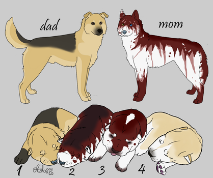 Mutt Pups for adoption 5pt(CLOSED) by WillowWinters