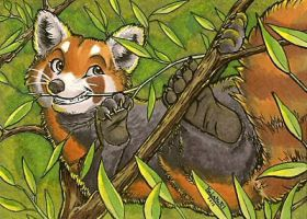 Red panda ACEO by KalahariFox