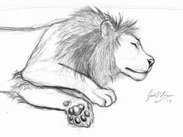 Lion Sketch by AokiBengal