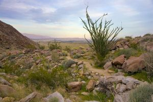 Ocotillo trail by xelf