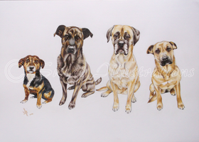 Four Dogs by SweetIllustrations
