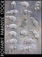 Rats 004 White Albino by poserfan-stock