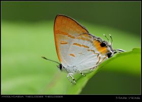 PU Butterflies VII by log1t3ch