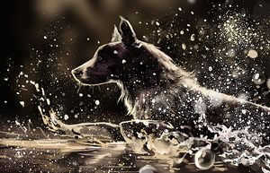 Collie speed paint by go234