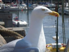 seagull by 2MarK4
