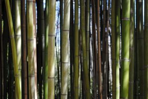 Bamboo by LucieG-Stock