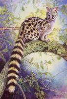Genet by WillemSvdMerwe