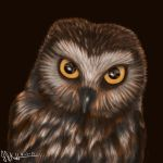 Noel the Northern Saw-Whet Owl by Dragonflm61