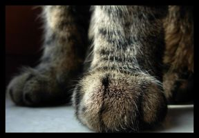 cat paws by happymaster