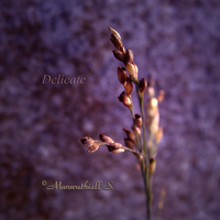 Delicate by Manwathiell