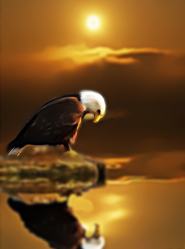 The Eagle by BushcraftOnFire